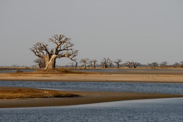 Pourquoi voyager au Sénégal