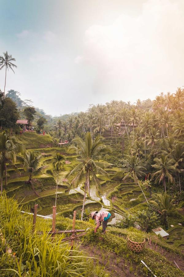 Pourquoi l'Indonésie ?