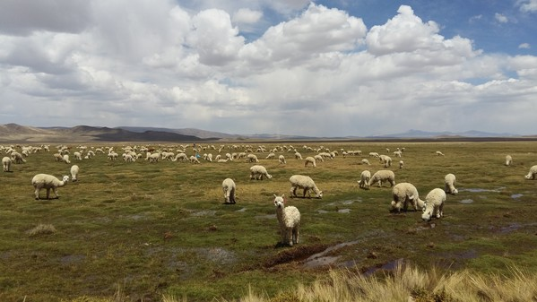 Pérou Voyage haut plateaux