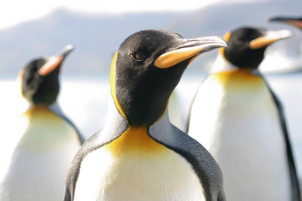 Notre spécialiste Arctique & Antarctique vous en dit plus