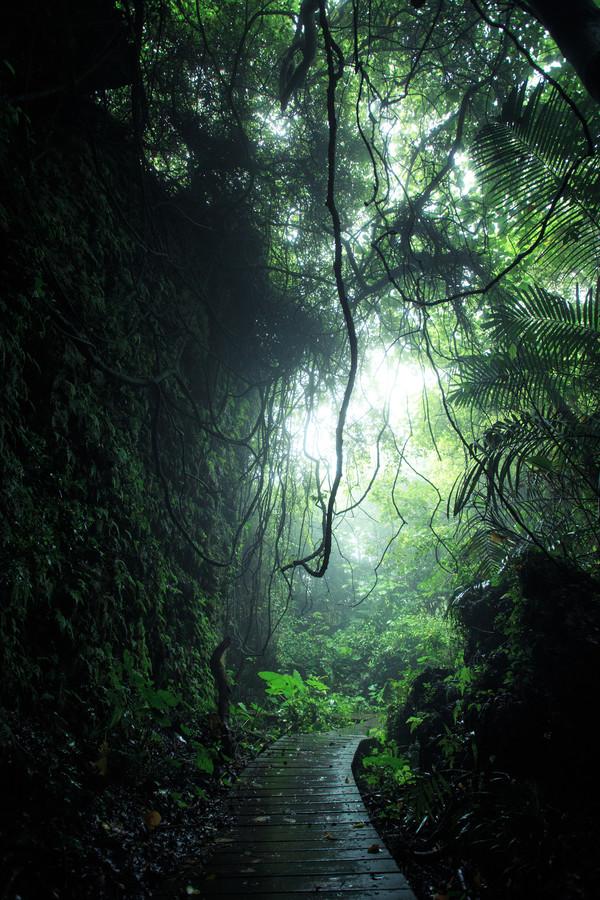 La montagne des singes à Kaohsiung