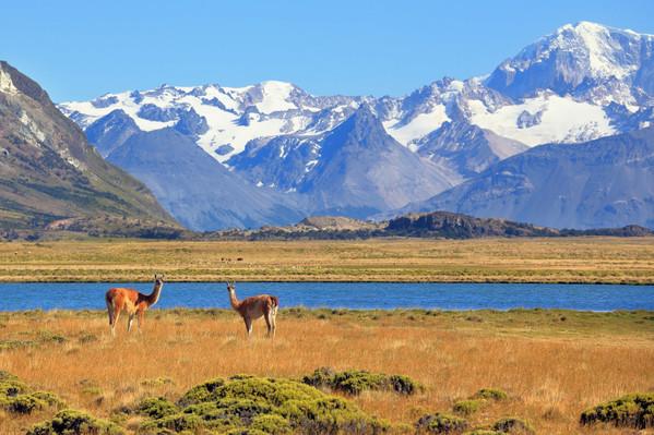 Chili Voyage Patagonie avec faune