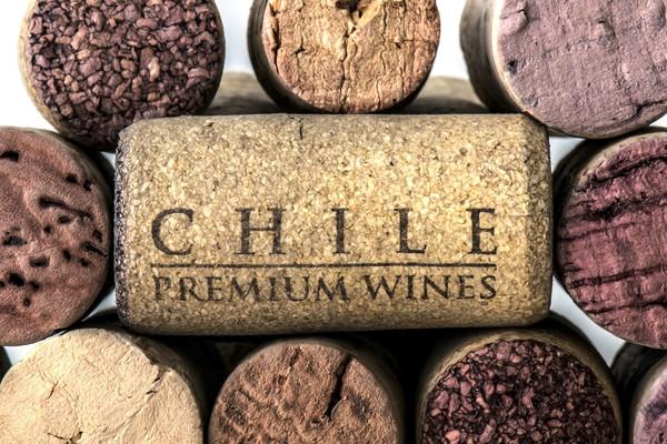 Chili Voyage viticole