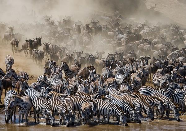 voyage kenya grande migration