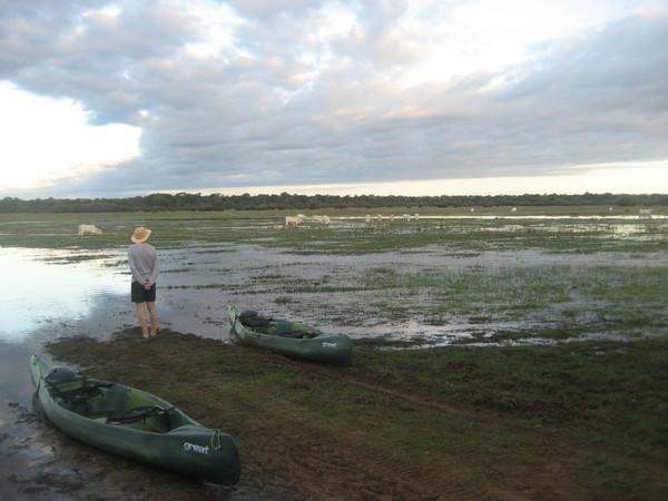 Brésil Voyage Pantanal