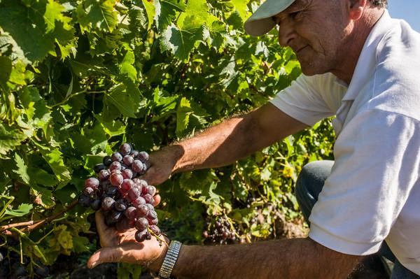 Uruguay Voyage Carmelo producteur de vins