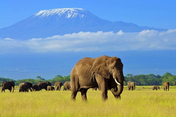 voyage afrique kenya elephant