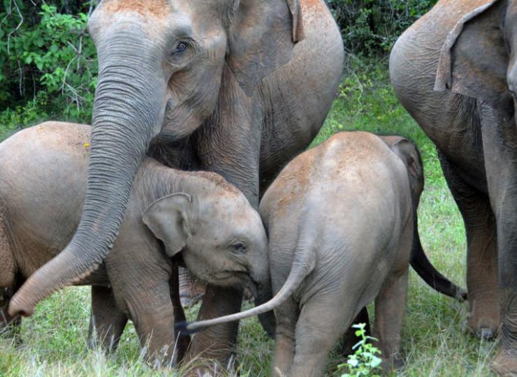 Parcs nationaux et safaris