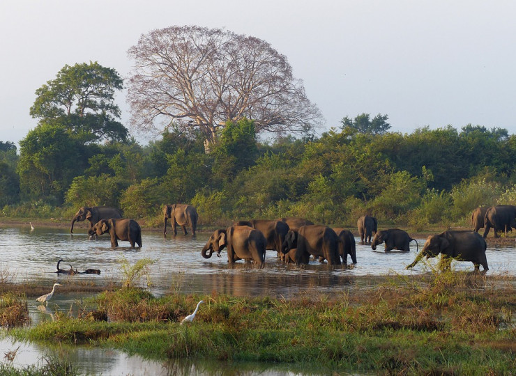 Interaction avec les éléphants à Pinnawela