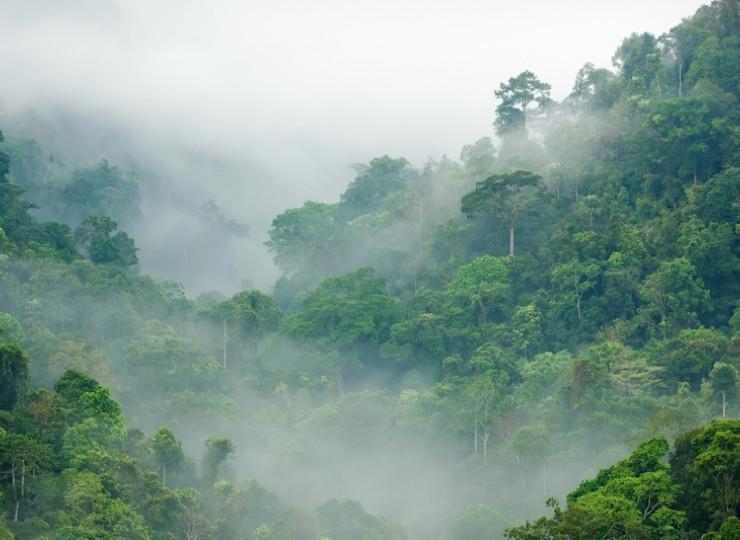 Forêts de nuages