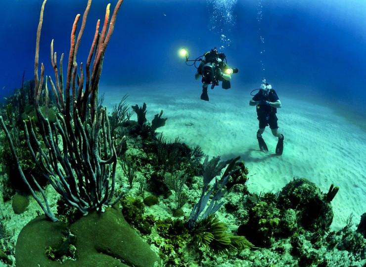 Plongée & Snorkeling