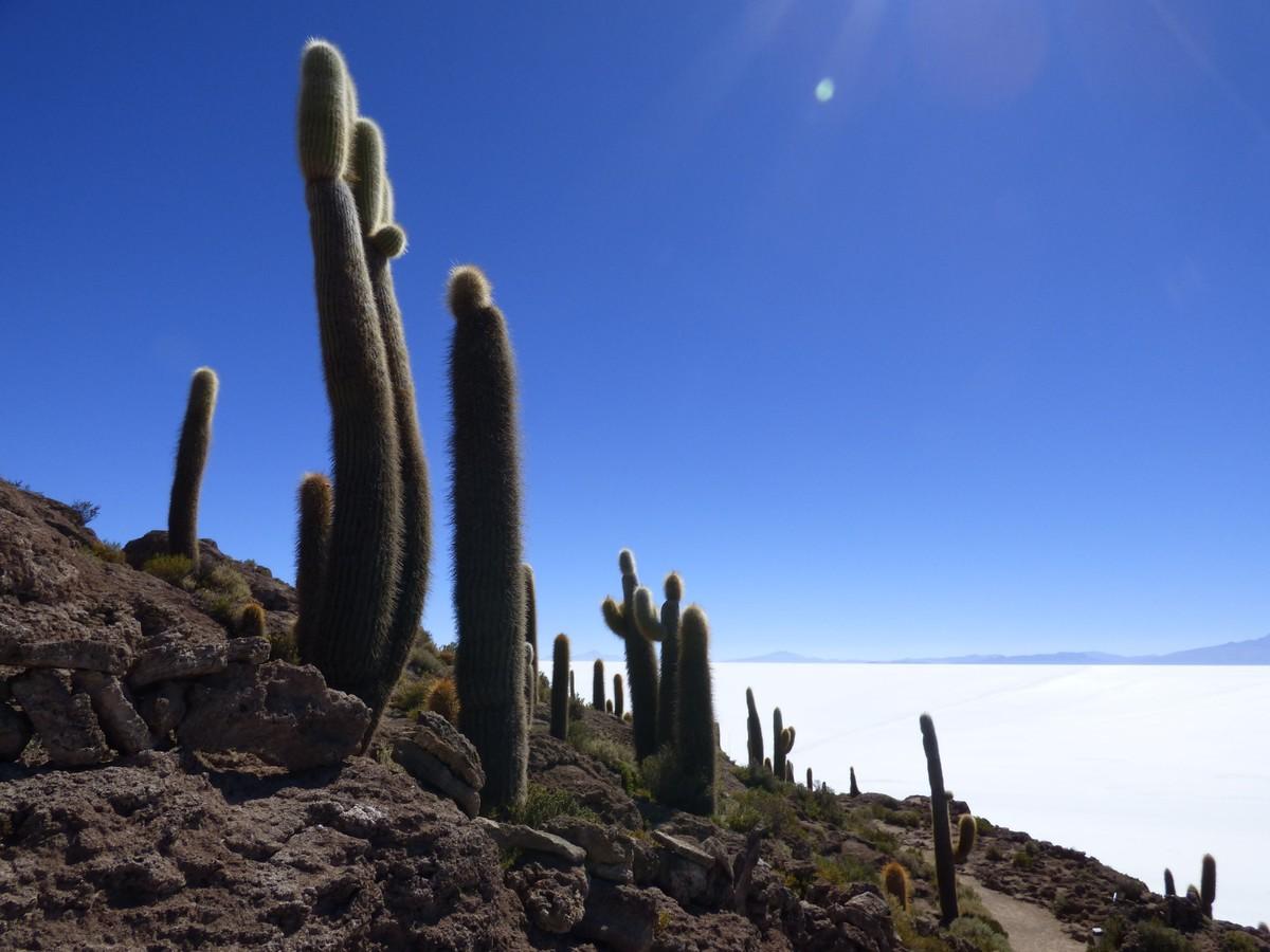 Bolivie Voyage Isla Incahuasi Uyuni