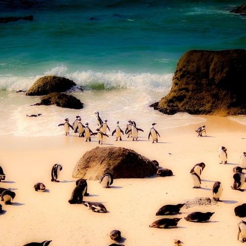 voyage-afrique du sud-le cap