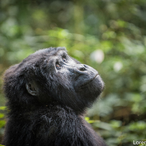 voyage-ouganda-bwindi