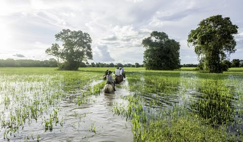 Pantanal sud