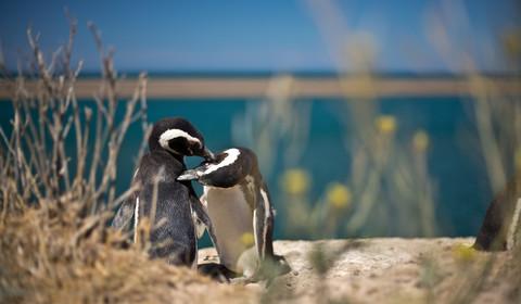 Croisière dans les fjords de Patagonie