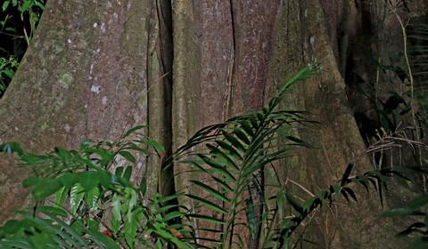 Forêt Nationale du Tapajos - Lac Marai