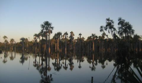 Amazonie Sud