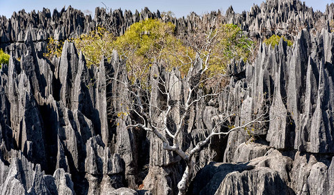 Randonnée dans les Tsingy de l'Ankarana