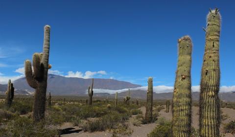 Salta - Cachi (165 km // 4 à 5 heures)