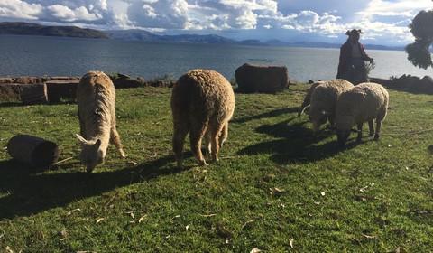 Llachon - Lac Titicaca - Lima
