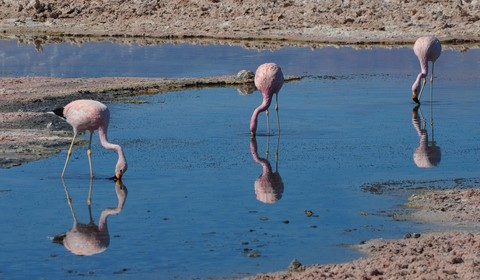 San Pedro de Atacama, Tocanao - Salar d'Atacama