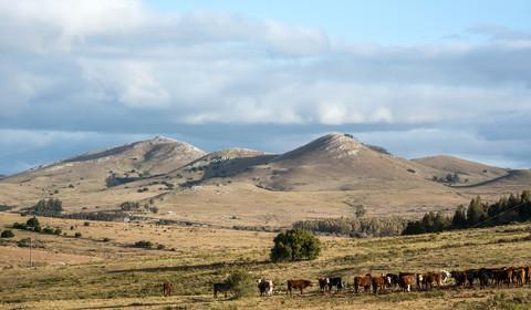 Montevidéo - Flores (env. 220 km)