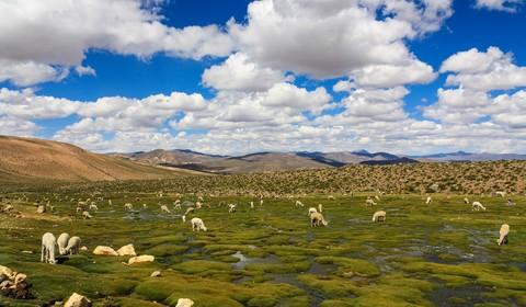 Putre - Lac Chungara -Arica