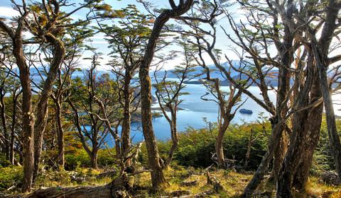 Cap Horn - Baie Wulaia