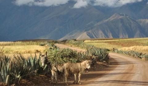 Cusco - VTT de Maras à Moray - Cusco