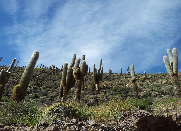 Argentine Voyage Nord-Ouest cactus