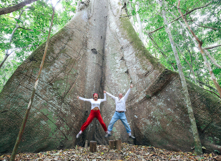 Brésil Voyage Amazon Dream arbre géant