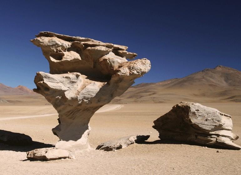 Bolivie Voyage arbre pétrifié