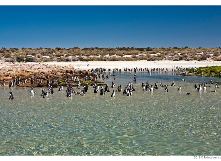 argentine Voyage Bahia Bustamante colonie de manchots