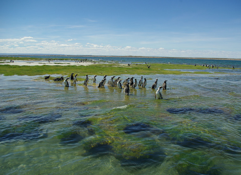 argentine Voyage Bahia Bustamante pingouins