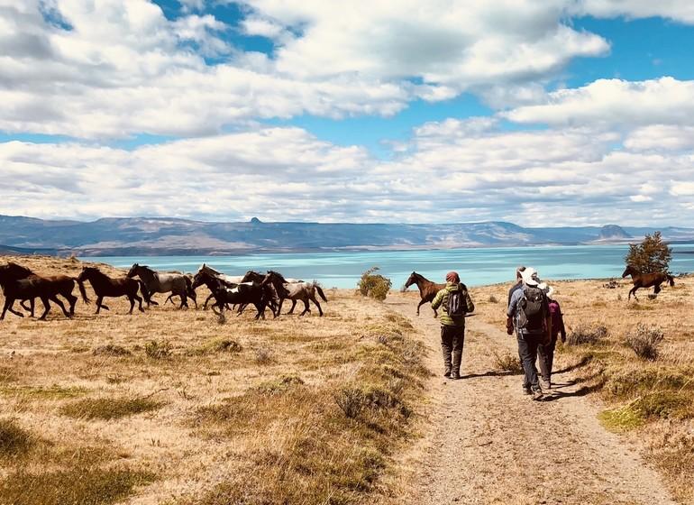 Argentine Voyage Patagonie Estancia La Maipú cheveaux