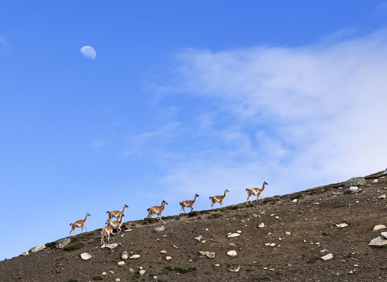 Argentine Voyage Patagonie Estancia La Maipú faune