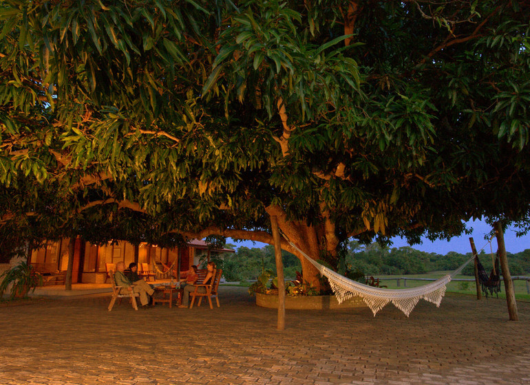 Brésil Voyage Pantanal Barranco Alto hamac sous le grand manguier