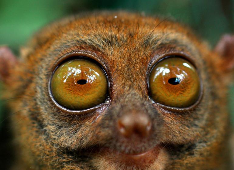 Voyage Asie Philippines tarsier Bohol