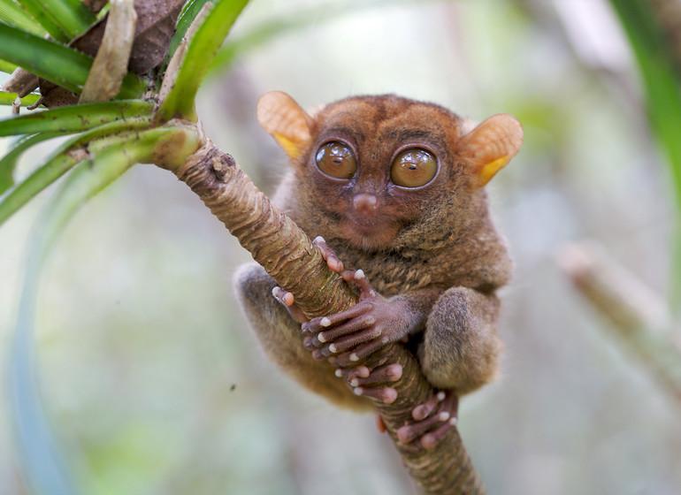 Asie voyage philippines bohol tarsier chocolate hills
