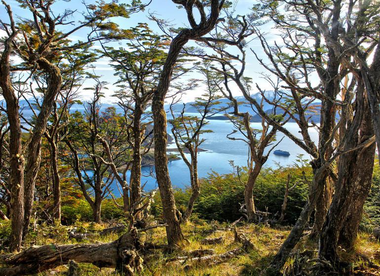 Chili Patagonie Voyage Croisière Wulaia Bay