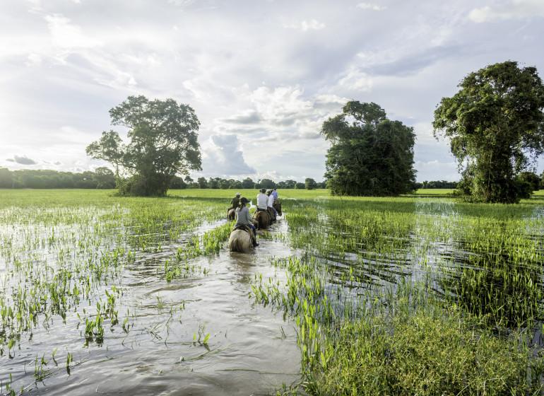 Brésil Voyage Pantanal à cheval