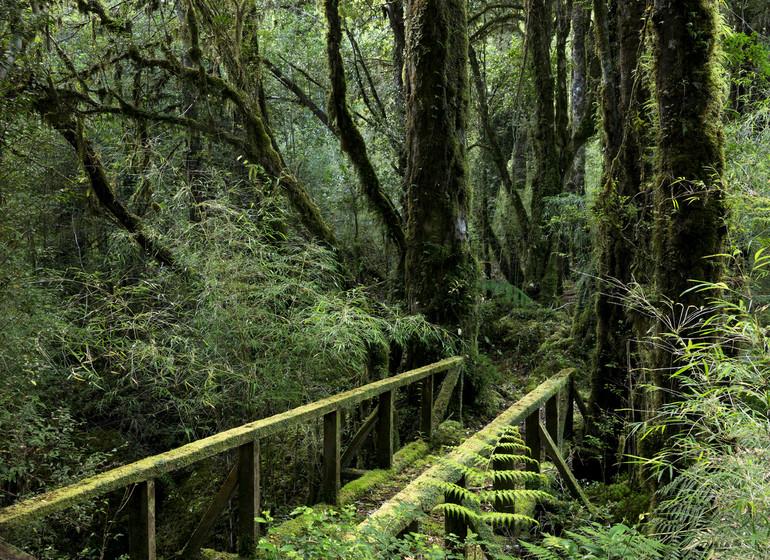 Chili Voyage Futangue Parc