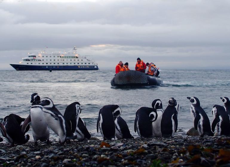 Chili Patagonie Voyage Croisière Isla Magdalena