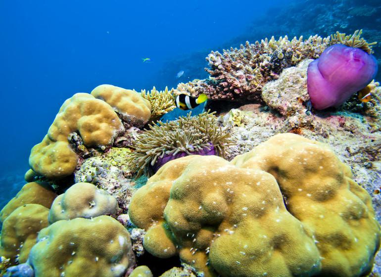 Croisière Dream Maldives