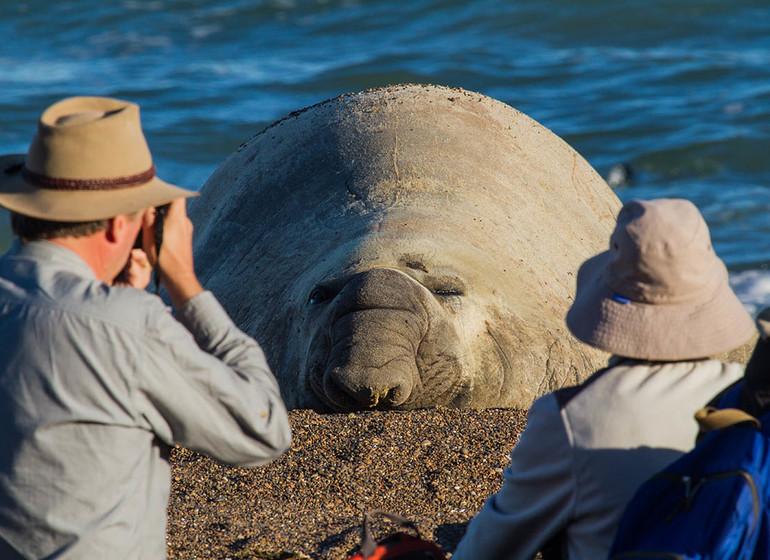 Argentine Voyage Valdès Rincon Chico éléphant de mer