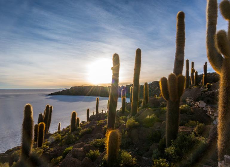 Bolivie Voyage Isla Incahuasi salar d'Uyuni
