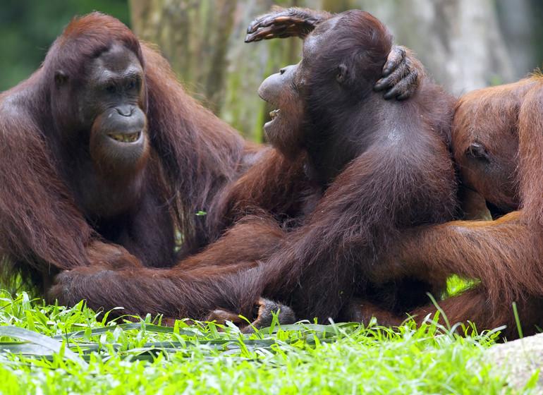 Découverte de Sumatra