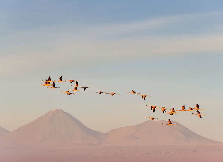 Chili Voyage Atacama flamants roses volant devant volcans