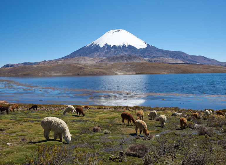 Chili Voyage Parinacota avec faune